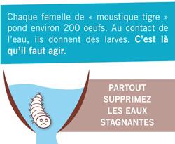 """Moustique Tigre - Visuel """"Larve moustique""""  250*205"""