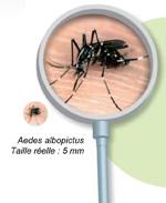 Moustique Tigre - Visuel 'Moustique à la loupe' 150*183